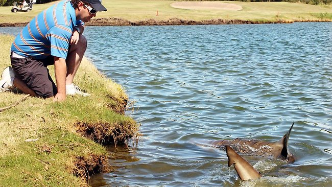 Forget alligators, this golf course in Australia has sharks