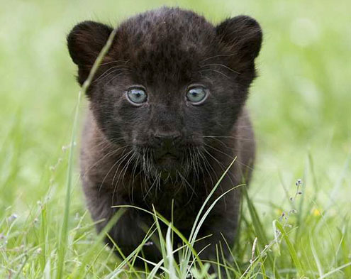 These Baby Animals of the NFL Will Make You Go AWWWW